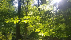Δάσος 42 στοκ εικόνα