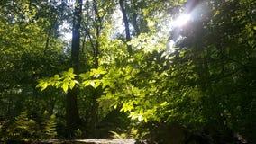 Δάσος 43 Στοκ φωτογραφίες με δικαίωμα ελεύθερης χρήσης