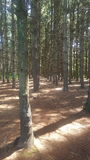 Δάσος 79 στοκ εικόνα