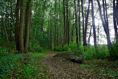 Δάσος Στοκ εικόνα με δικαίωμα ελεύθερης χρήσης