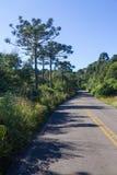 Δάσος angustifolia δρόμων και αροκαριών Στοκ Φωτογραφία