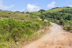 Δάσος angustifolia δρόμων και αροκαριών Στοκ Εικόνες