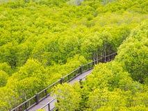 Δάσος apiculata γεφυρών και rhizophora Στοκ φωτογραφίες με δικαίωμα ελεύθερης χρήσης