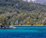 Δάσος Arrayanes με τα φωτεινά κίτρινα λουλούδια στην ακτή Στοκ εικόνα με δικαίωμα ελεύθερης χρήσης