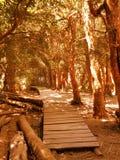 Δάσος Arrayanes Στοκ εικόνα με δικαίωμα ελεύθερης χρήσης