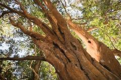 Δάσος Arrayanes Στοκ φωτογραφία με δικαίωμα ελεύθερης χρήσης