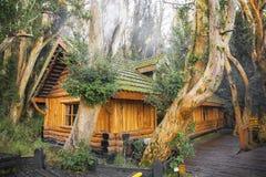 Δάσος Arrayanes Στοκ εικόνες με δικαίωμα ελεύθερης χρήσης