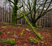 Δάσος Autum Στοκ φωτογραφία με δικαίωμα ελεύθερης χρήσης