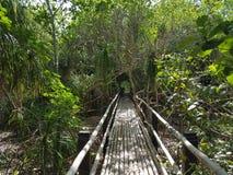 Δάσος Camiguin Στοκ φωτογραφία με δικαίωμα ελεύθερης χρήσης