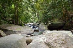 Δάσος Chantathen στοκ εικόνες