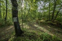 Δάσος croassroad Στοκ Εικόνες