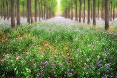 Δάσος Dreamlike στοκ εικόνα με δικαίωμα ελεύθερης χρήσης
