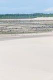 Δάσος elliottii πεύκων που καλύπτεται από τους αμμόλοφους στο DOS Patos Lagoa στοκ φωτογραφίες