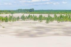 Δάσος elliottii πεύκων που καλύπτεται από τους αμμόλοφους στο DOS Patos Lagoa στοκ εικόνα