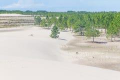 Δάσος elliottii πεύκων που καλύπτεται από τους αμμόλοφους στο DOS Patos Lagoa στοκ φωτογραφία με δικαίωμα ελεύθερης χρήσης