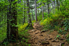 Δάσος 3 Enchanted Στοκ φωτογραφία με δικαίωμα ελεύθερης χρήσης