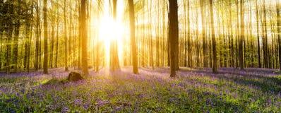 Δάσος Hallerbos Στοκ φωτογραφία με δικαίωμα ελεύθερης χρήσης