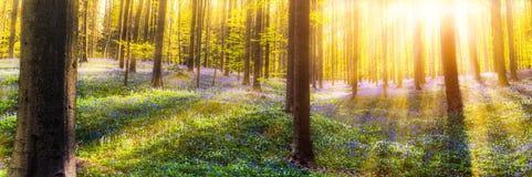 Δάσος Hallerbos Στοκ φωτογραφίες με δικαίωμα ελεύθερης χρήσης