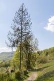 Δάσος Hornbeam Στοκ φωτογραφίες με δικαίωμα ελεύθερης χρήσης