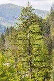 Δάσος Hornbeam Στοκ εικόνες με δικαίωμα ελεύθερης χρήσης