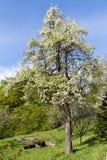 Δάσος Hornbeam Στοκ φωτογραφία με δικαίωμα ελεύθερης χρήσης