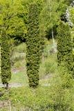 Δάσος Hornbeam Στοκ εικόνα με δικαίωμα ελεύθερης χρήσης
