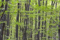 Δάσος Hornbeam - 03 Στοκ Φωτογραφία