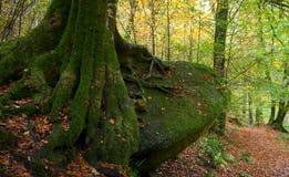 δάσος huelgoat Στοκ Εικόνα