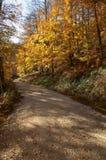 Δάσος Irati στοκ φωτογραφία με δικαίωμα ελεύθερης χρήσης