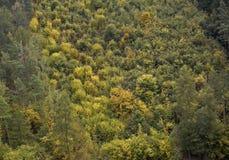 δάσος karlstejin Στοκ φωτογραφία με δικαίωμα ελεύθερης χρήσης