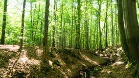Δάσος Lightflooded Στοκ φωτογραφία με δικαίωμα ελεύθερης χρήσης