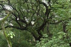 Δάσος Lishui Στοκ φωτογραφία με δικαίωμα ελεύθερης χρήσης