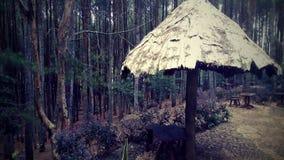 Δάσος Mangunan στοκ φωτογραφία με δικαίωμα ελεύθερης χρήσης