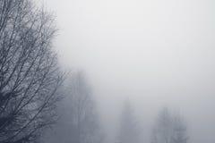 δάσος misty Στοκ Εικόνα