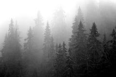 δάσος misty Στοκ Φωτογραφία