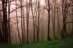 δάσος misty Στοκ εικόνες με δικαίωμα ελεύθερης χρήσης