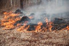 Δάσος pazhar Αφόρησε τη χλόη στοκ φωτογραφία