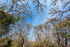 Δάσος Plumeria Στοκ εικόνα με δικαίωμα ελεύθερης χρήσης