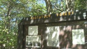 Δάσος Pootatuck (3 4) απόθεμα βίντεο