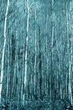 Δάσος Popple Στοκ εικόνα με δικαίωμα ελεύθερης χρήσης