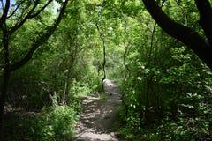 Δάσος Sarospatak στοκ φωτογραφίες