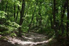 Δάσος Sarospatak στοκ φωτογραφίες με δικαίωμα ελεύθερης χρήσης