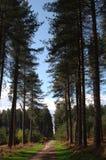 δάσος sherwood στοκ φωτογραφία με δικαίωμα ελεύθερης χρήσης