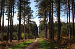 δάσος sherwood στοκ εικόνα με δικαίωμα ελεύθερης χρήσης