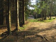Δάσος Slavkovsky les Στοκ εικόνες με δικαίωμα ελεύθερης χρήσης