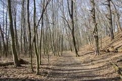 Δάσος stran Nemosicka στο τέλος του χειμώνα, φως του ήλιου στους κλάδους, τρόπος σε όλη την καταπληκτική φυσική περιοχή Στοκ Φωτογραφία