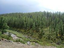 Δάσος Taiga στοκ φωτογραφία με δικαίωμα ελεύθερης χρήσης