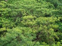 Δάσος Topview Στοκ Εικόνες