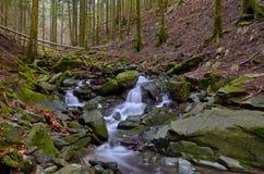 Δάσος Vallombrosa, καταρράκτης 1 Στοκ Εικόνες