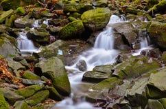Δάσος Vallombrosa, καταρράκτης 2 Στοκ Φωτογραφίες